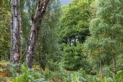 Walla Crag walk, Great Wood