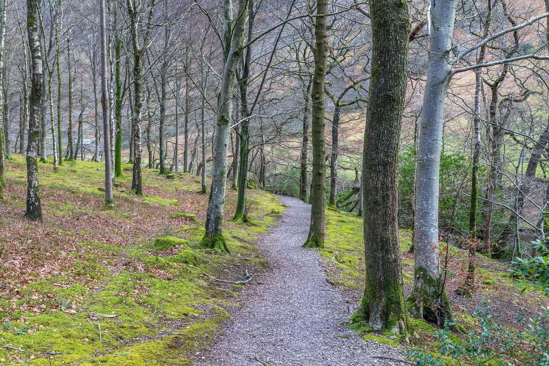 Wast Water walk, Low Wood