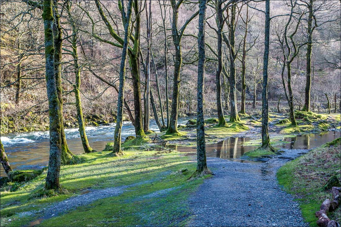Low Hows Wood Borrowdale