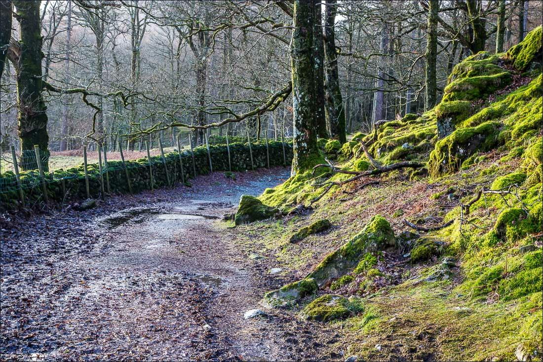 Dalt Wood Borrowdale