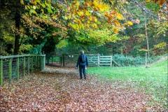 Welton Dale walk