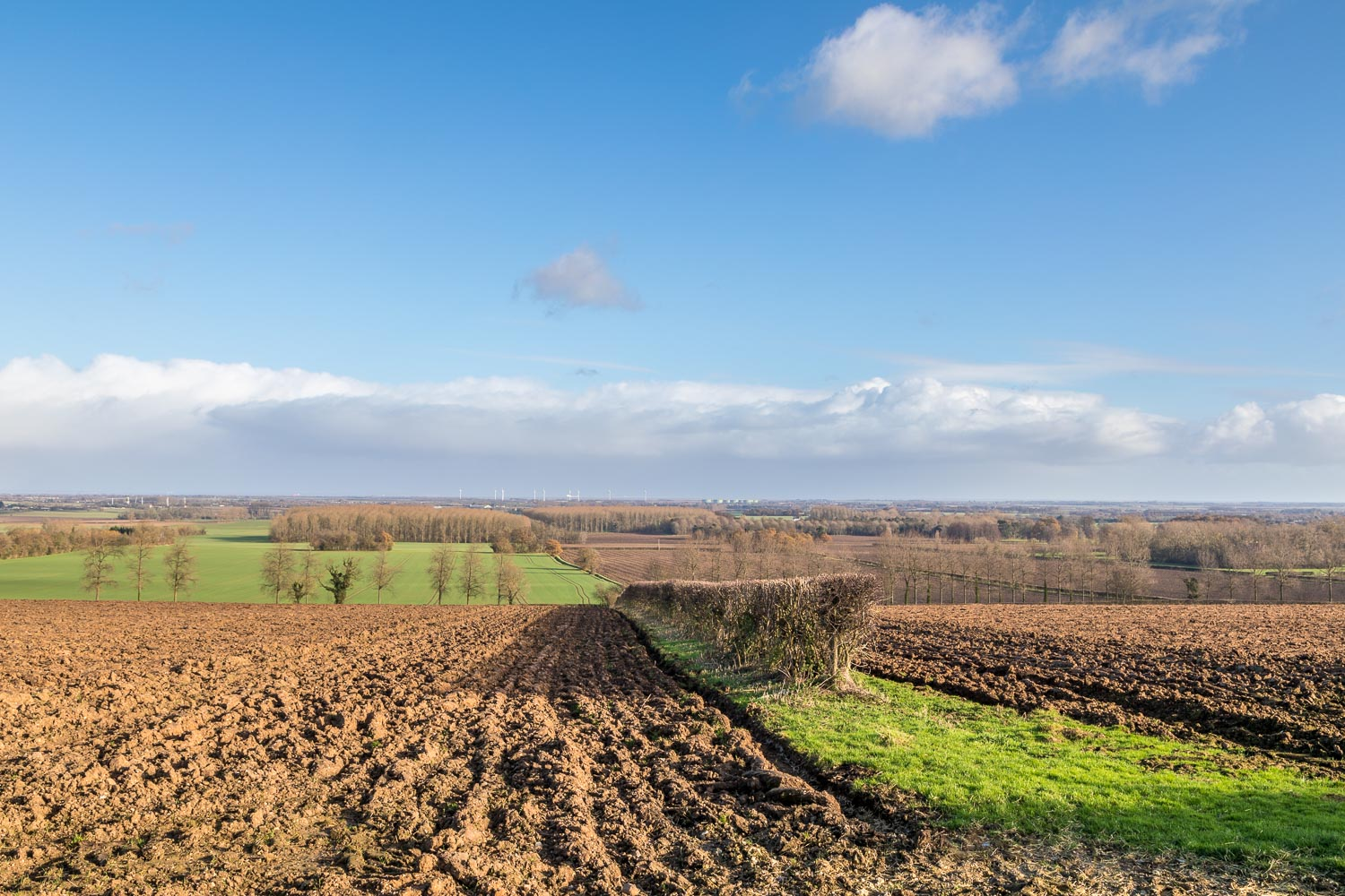 Wold Newton view