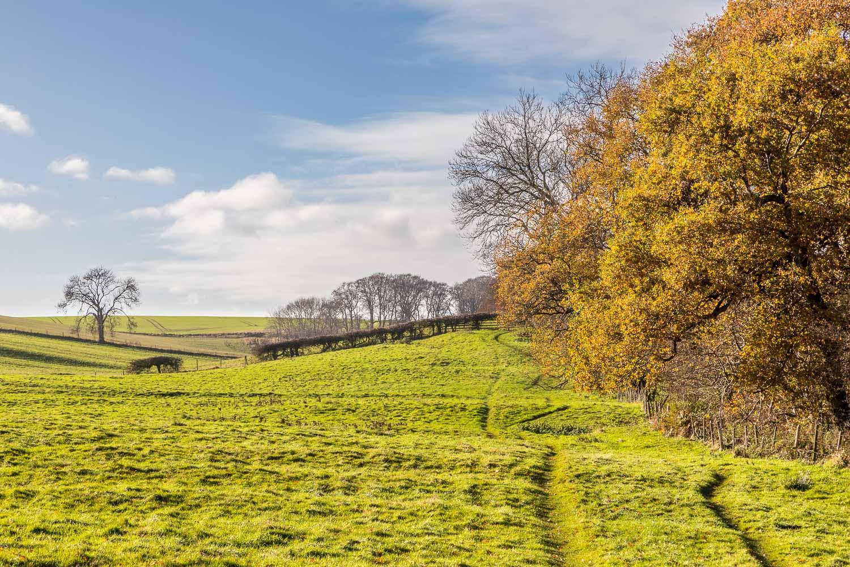 Wold Newton walk, Beesby Wood, Wanderlust Way