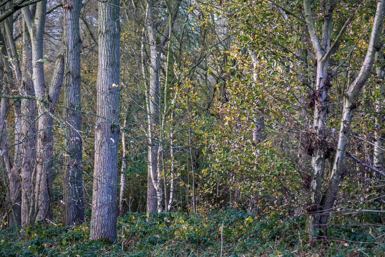 Petterhills Fox Covert, Wold Newton