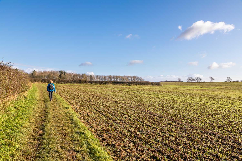 Target Plantation, Wold Newton