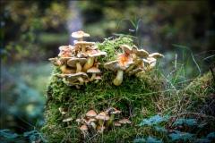 Wykeham Forest fungi