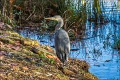 Yorkshire Sculpture Park, heron