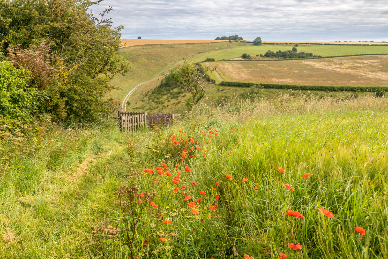 Chalkland Way near Thixendale