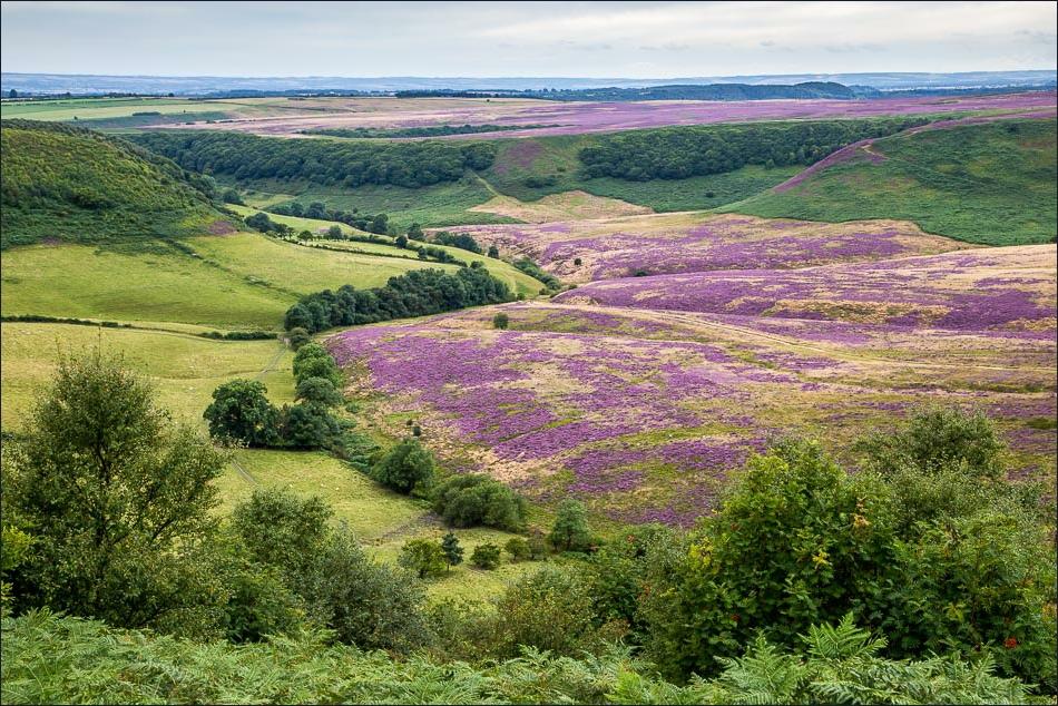 Hole of Horcum walk, Levisham Moor
